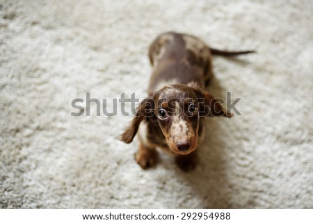 Sad puppy is covered with a blanket - stock photo