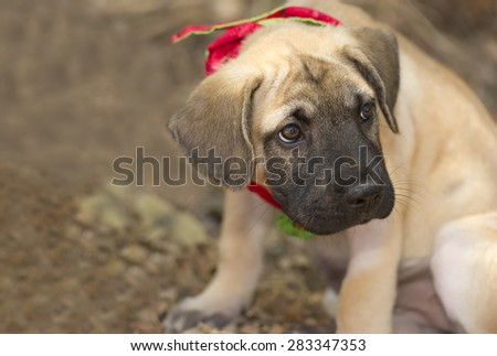 Sad puppy face stock images royalty free images vectors sad puppy is sitting outdoors with a pout on his face voltagebd Gallery