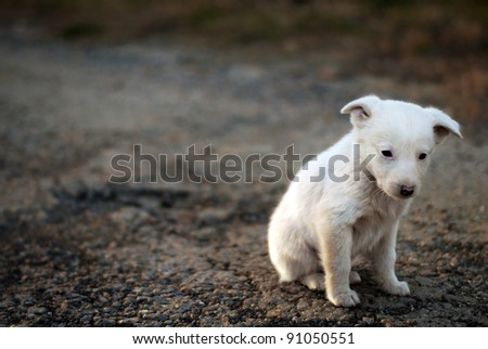 sad puppy on the street - stock photo