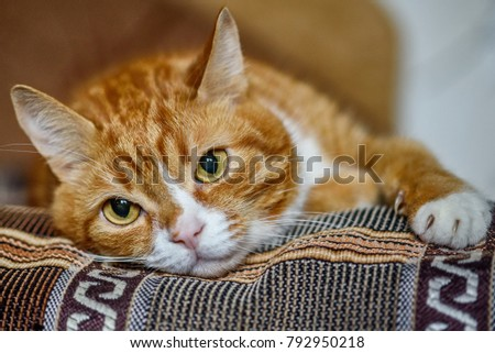 sad red cat resting on the couch