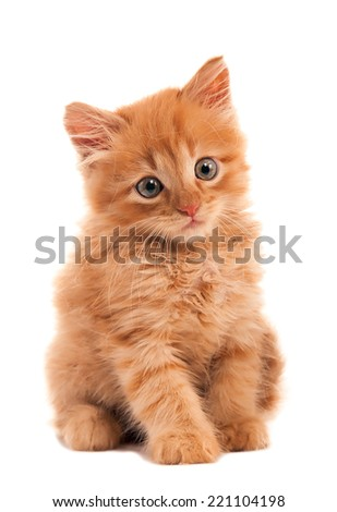 Sad red-haired kitten - stock photo