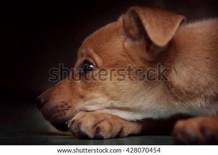 sad red puppy pooch at the shelter put his head between his paws - stock photo