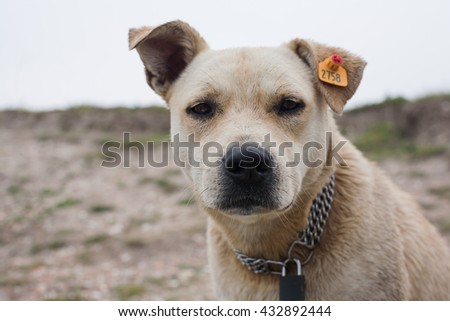 Sad stray dog - stock photo