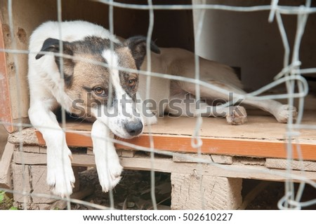 Sad stray dog in its wooden box behind the corral of a dog refuge