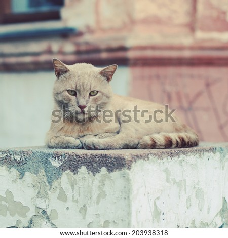 Sad street cat. Photo toned style instagram filters - stock photo