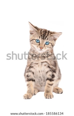 sad tabby kitten with blue eyes sitting on white background