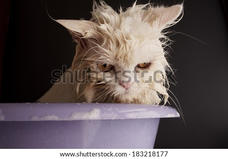 """cat_bath"" Stock Photos, Royalty-Free Images & Vectors ..."