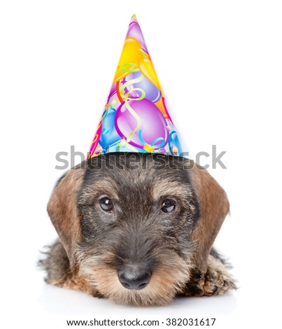 Sad wire-haired dachshund puppy in birthday hat. isolated on white background