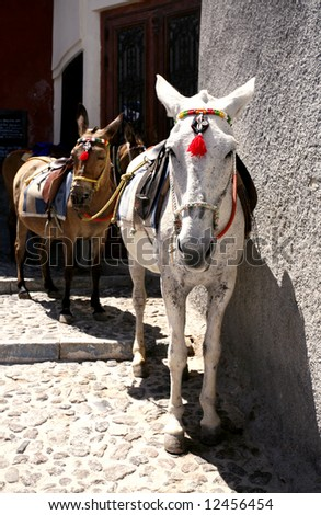 Saddled and decorated mules or donkeys waiting for tourists to carry up or down the cliff from the  port at Fira, Santorini, to the village above. - stock photo