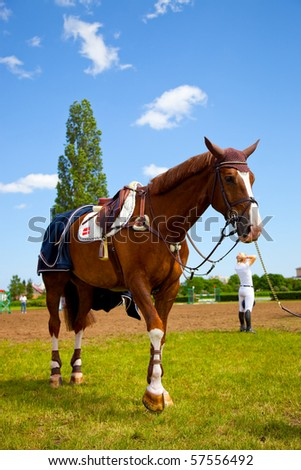 Saddled horse ready to run. - stock photo