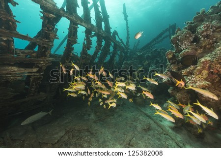 Safari boat wreckage and aquatic life in th Red Sea - stock photo