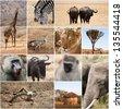 Safari collage - stock photo