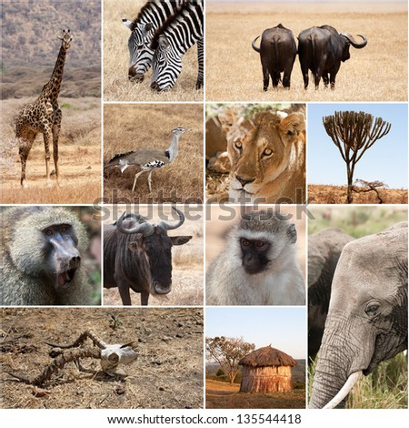 Safari collage - stock photo