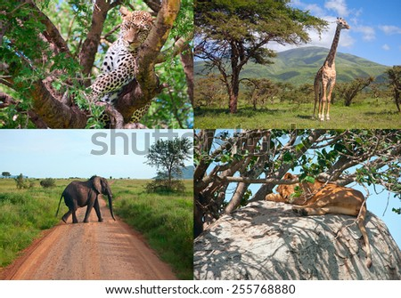 Safari in Africa. set of wild animalds - stock photo