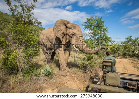 Safari in Mkzuze falls - stock photo
