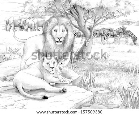 Safari - lion - coloring page - illustration for the children - stock photo