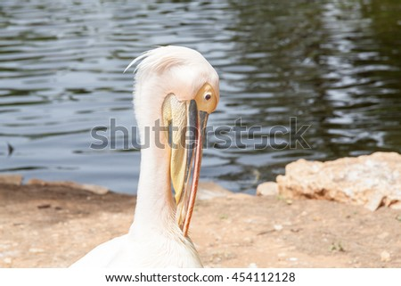 Safari visit on weekend. Beautiful profile of the White pelican  - stock photo