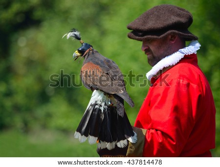 SAFFRON WALDEN, ESSEX, ENGLAND - JUNE 05, 2016: Hooded Harris Hawk on the glove of a man wearing a red  Elizabethan costume.  - stock photo