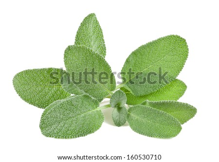 Sage bunch isolated on white - stock photo