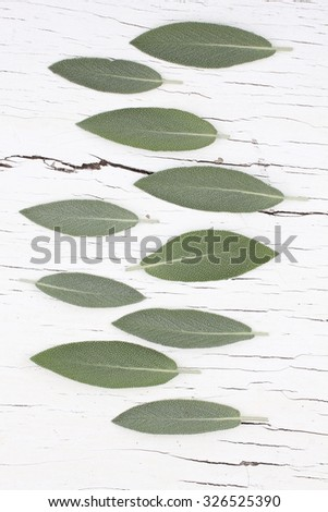 sage herb on a white background - stock photo