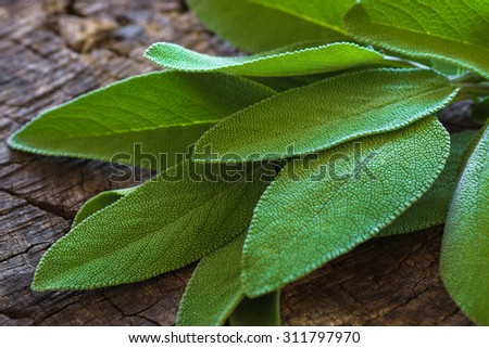sage on an old wooden table. Selective focus