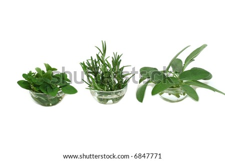 Sage, rosemary, and oregano - aromatic herbs. Cuisine concept.