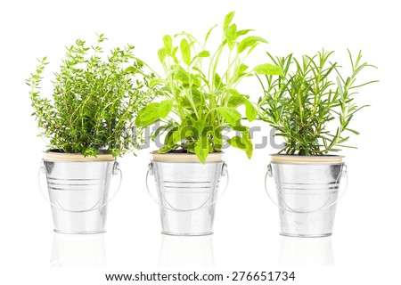 Sage, thyme and rosemary herb plant growing in a distressed pewter pot, isolated over white background. Salvia. - stock photo