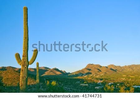 saguaro cactus and tucson valley in arizona desert - stock photo