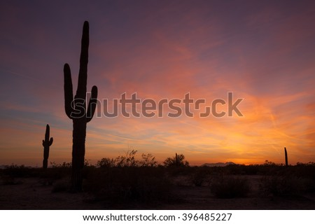 Saguaro Cactus at sunset in the Sonoran desert outside of Phoenix, Arizona