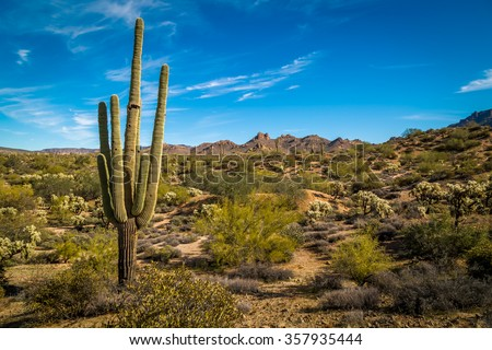 Saguaro Cactus in Arizona desert. - stock photo