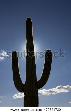 Saguaro cactus silhouette, Carnegiea gigantea, backlit by the sun, Saguaro National Park, Arizona.