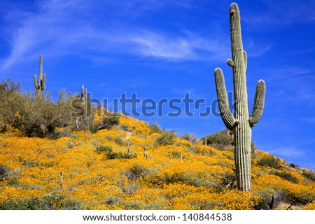 Saguaros and Spring Wildflowers in the Arizona Desert
