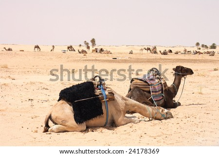 sahara - stock photo