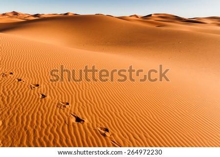 Sahara Desert, Sand Dunes at Sunset - stock photo