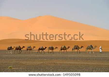 SAHARA, MOROCCO - JULY 12: Camel caravan going through the sand dunes, July 12, 2013 in Sahara Desert, Morocco. Sahara Desert very popular tourist place in east Morocco. - stock photo