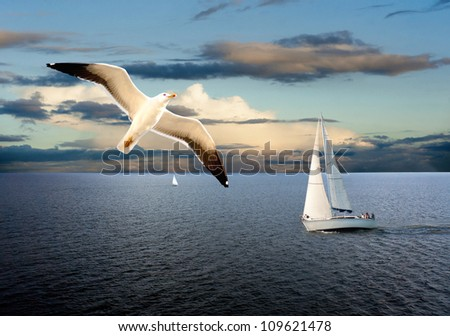 Sail boats on sea with cloudy sky and seagull in foreground - stock photo