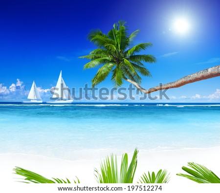 Sailboats on beach and palm tree. - stock photo