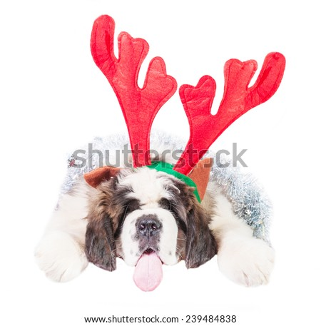 Saint bernard puppy dressed in a christmas horns - stock photo