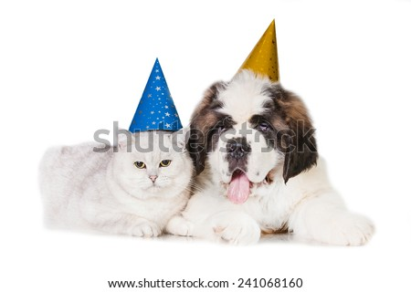 Saint bernard puppy with british shorthair cat dressed in birthday hats - stock photo