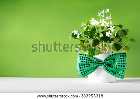 Saint Patricks Day shamrock in white pot with bowtie - stock photo