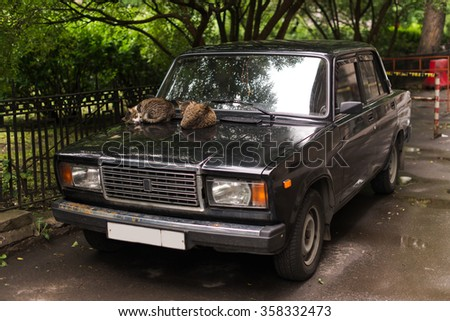 SAINT-PETERSBURG, RUSSIA, July 11, 2015. Homeless cat lying on the hood of the old car in yard