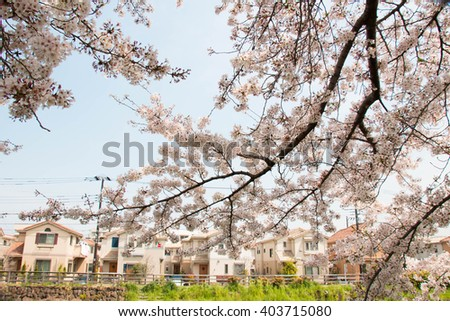 Sakura and city of the full bloom of Sasame River - stock photo