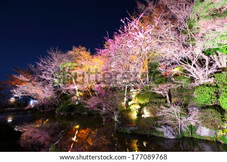 Sakura and river at night - stock photo