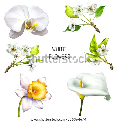 Sakura cherry tree blossom with green leaves on a branch, Daffodil flower or narcissus, calla flower,  illustration isolated on white background - stock photo