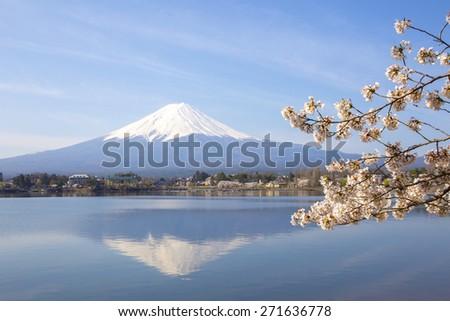sakura flower branches with fuji mountain and lake background - stock photo
