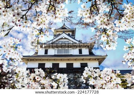 sakura season, Kyoto, Japan for adv or others purpose use - stock photo