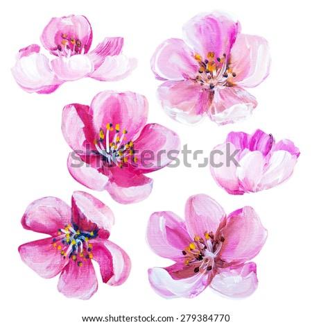 Sakura spring flowers isolated on white. Oil painting - stock photo