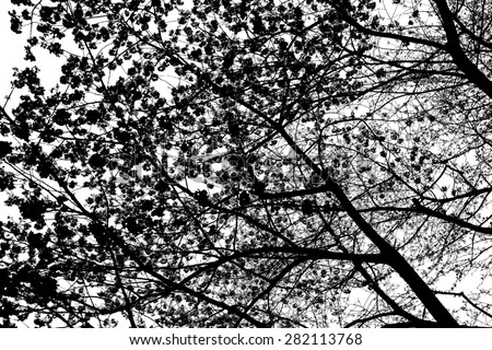Sakura texture abstract background image, Black  - stock photo
