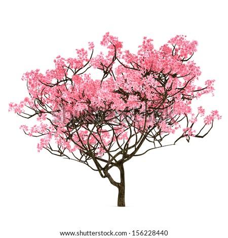 Sakura tree isolated - stock photo