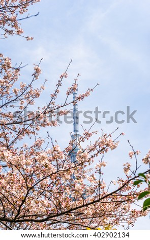 Sakura tree on the background of a television tower in Tokyo